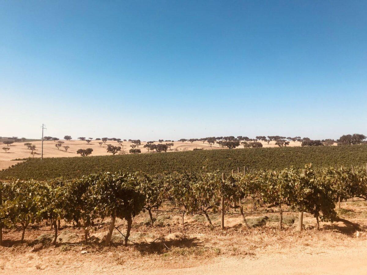 Aziende vinicole nell'Alentejo