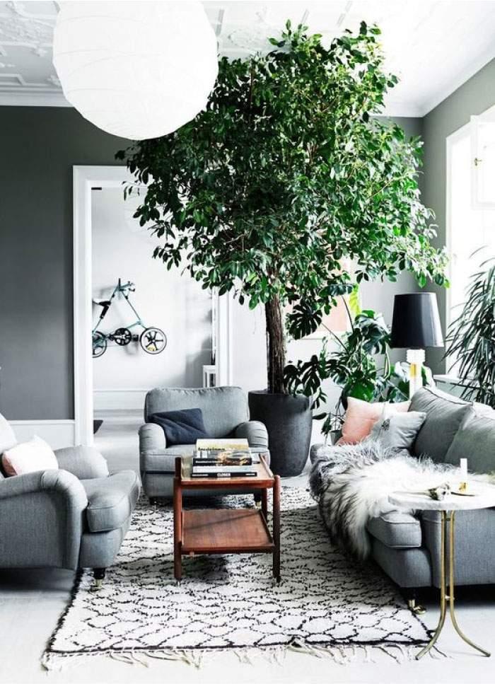 piante oversize